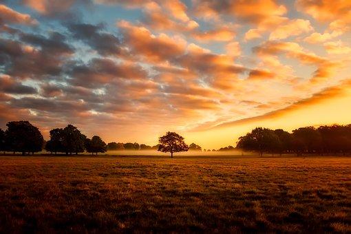 イングランド, イギリス, 日の出, 霧, 風景, 自然, アウトドア, 国