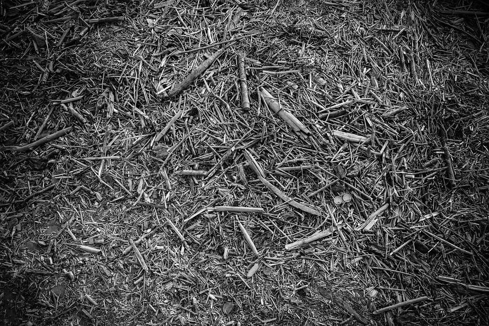 Legno Bianco E Nero : Bianco e nero texture del legno u foto stock nikodash