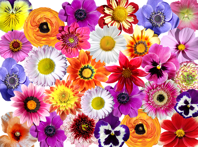 Flowers Flower Colorful · Free Photo On Pixabay