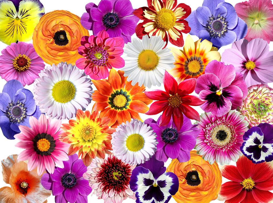 Flowers flower colorful free photo on pixabay for Pics of colourful roses
