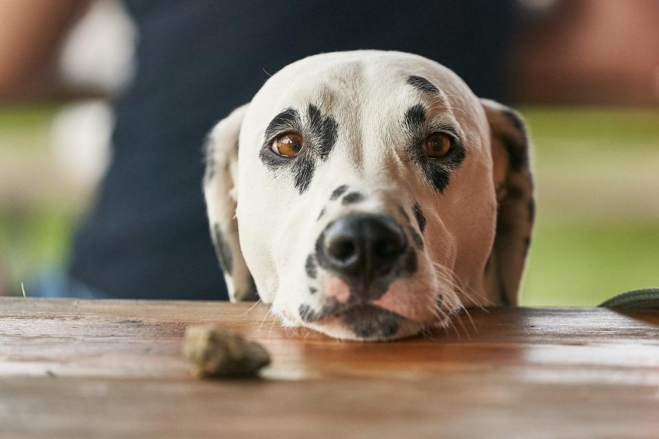 Hoe bedelen af te leren bij je hond?