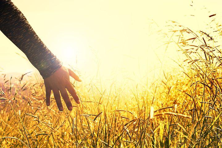 Hands, Grasses, Sunset, Feel, Touch
