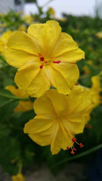 Yellow flowers flowers free photo on pixabay yellow flowers flowers red mightylinksfo
