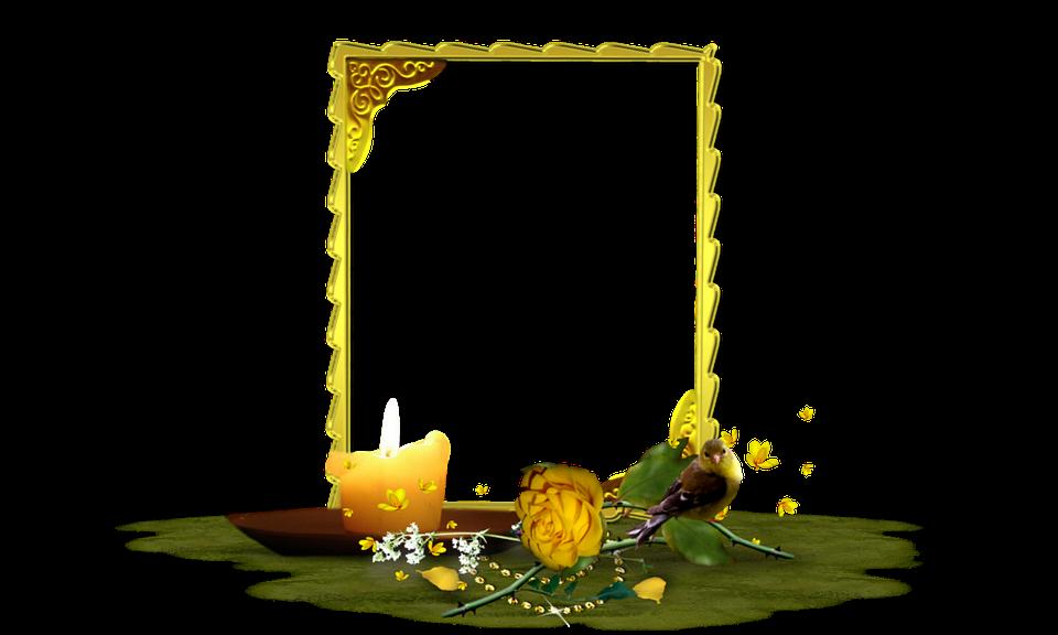 Rose Gelb Blume · Kostenloses Foto auf Pixabay