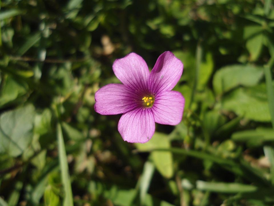 Fiore rosa pianta foto gratis su pixabay