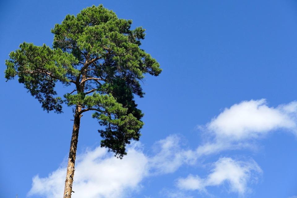 arbre ciel nuages nature reste srnit bleu - Arbre Ciel