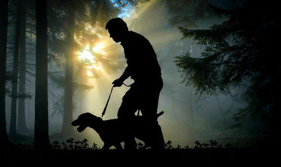 Walk, Man, Dog, Animal, Forest, Leisure