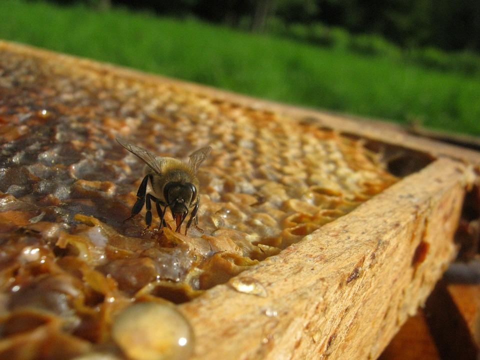 Bee Colmena Cera · Foto gratis en Pixabay