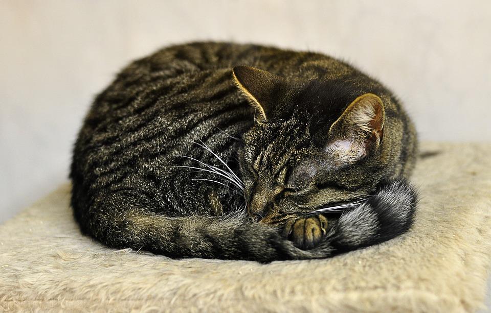 夜色猫hhh