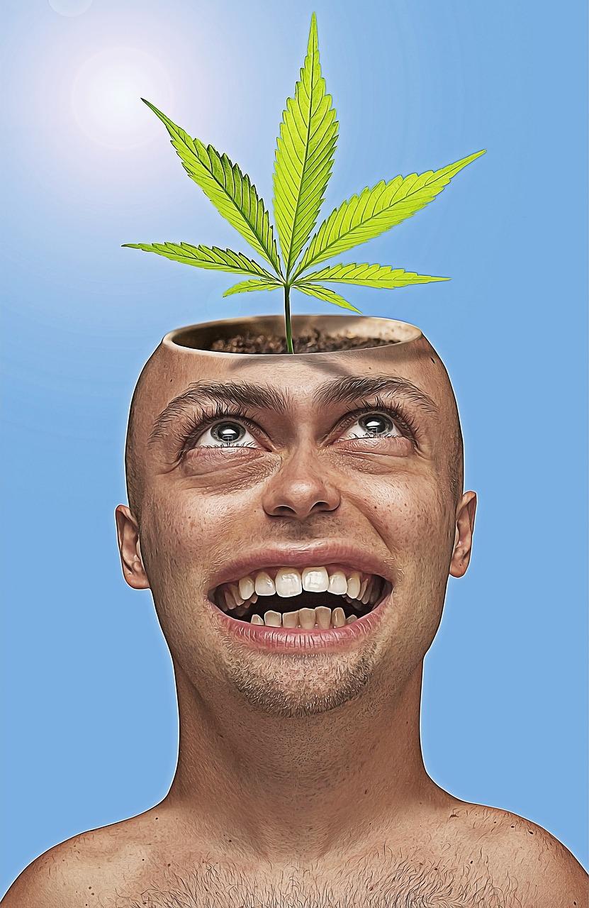 Смешные конопля воронеже в конопли семя купить