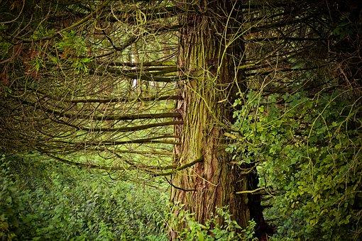 bosque rboles paisaje ramas hojas