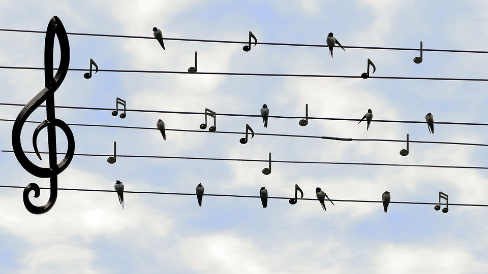 Birds, Swifts, Singing, Twitter, Music, Sound