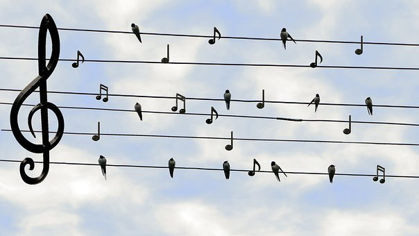 Birds, Swifts, Singing, Twitter, Music