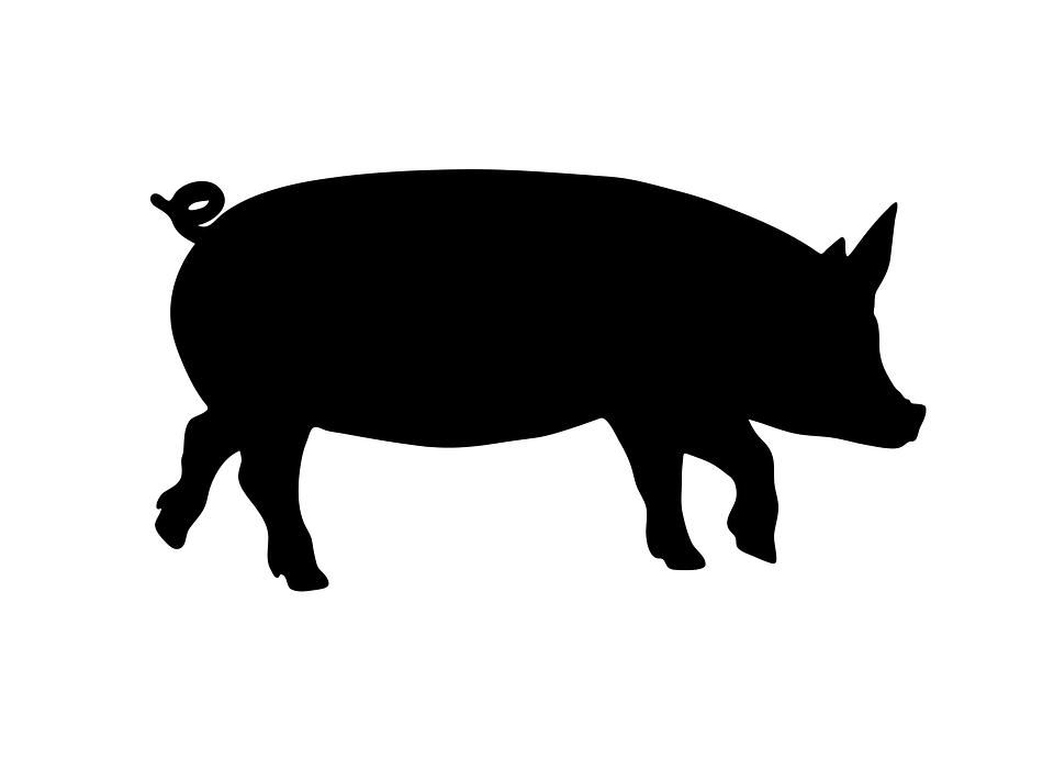 free vector graphic walk  walking  standing  pig free piggy clipart cute piggy clipart cute