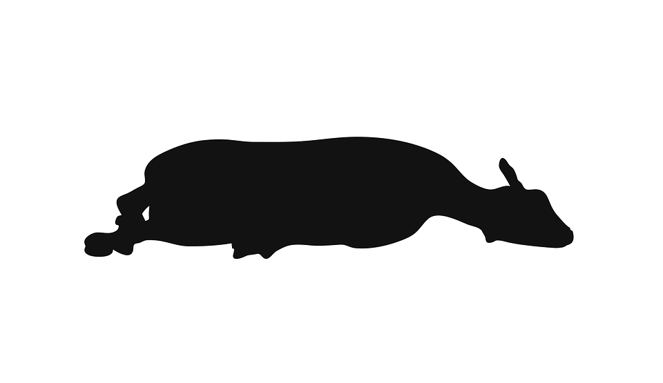 Sheep Animal Standing - Free vector graphic on Pixabay
