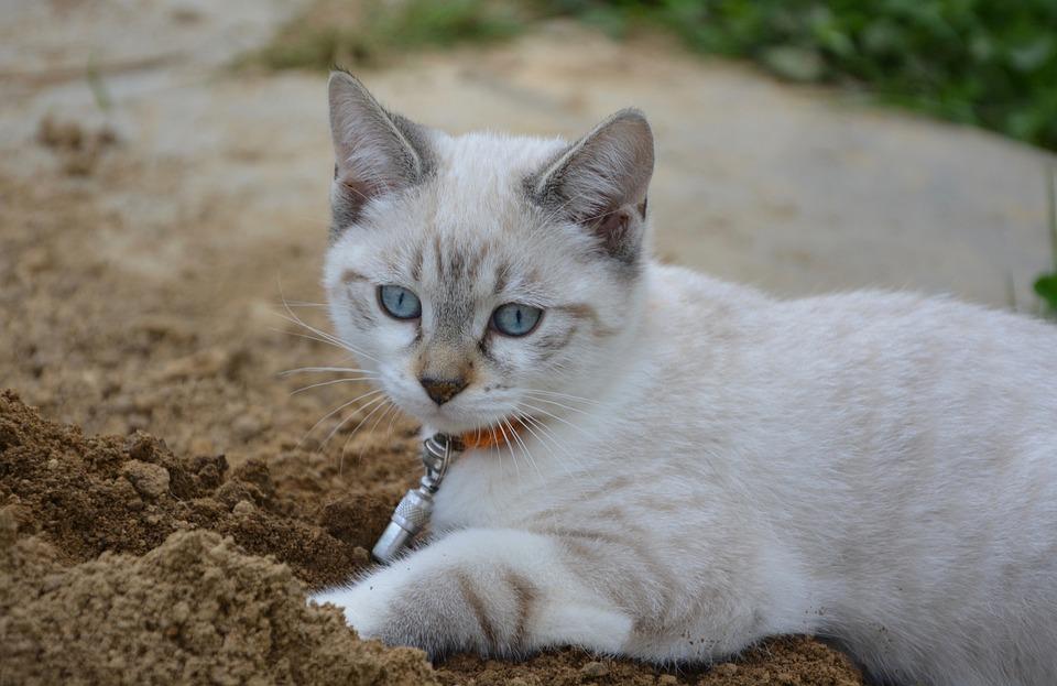 zdarma černé kočička rty MILF první velký péro