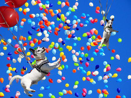Spassfototo, Dog, Balloons, Colorful
