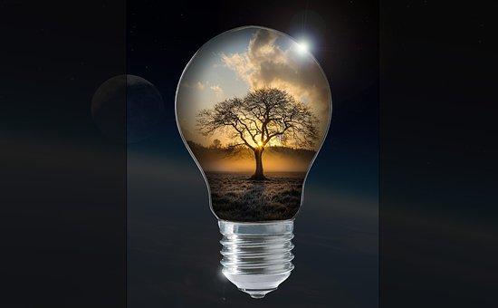 光, 梨, ランプ, 電球, エネルギー, 木, 太陽, 秋, 気分, コスモス