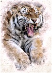 tiger, cat, predator