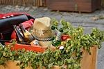 cart, stroller, beer