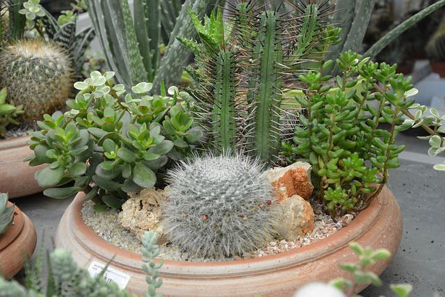 plants fat cactus pot free photo on pixabay. Black Bedroom Furniture Sets. Home Design Ideas