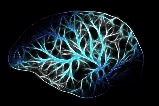 Brain, Biology, Anatomy, Think
