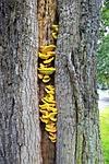 tree, oak, old