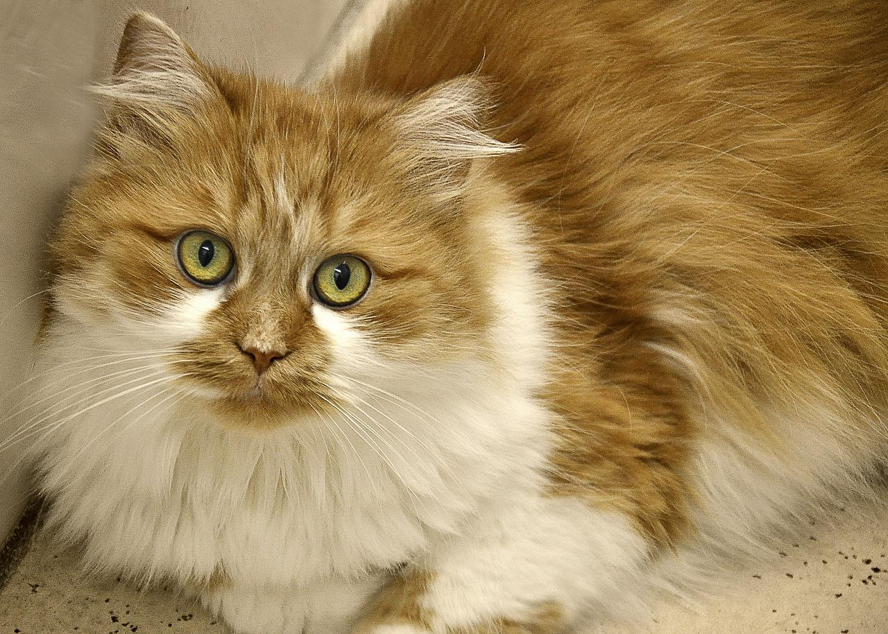 cat litter online singapore