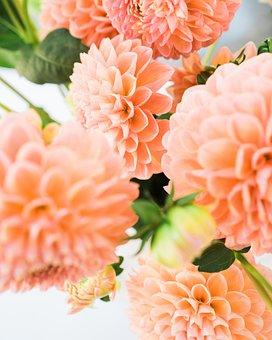 Dalia, Flowers, Petals, Garden, Nature