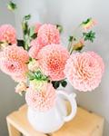 dalia, flowers, kwiaty