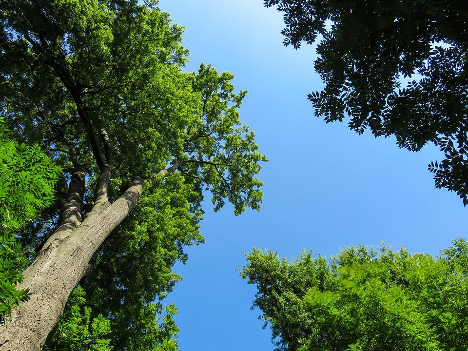 Unduh 66+ Gambar Pemandangan Pohon Paling Baru Gratis