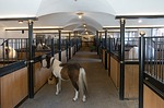stall, horse stable, stud