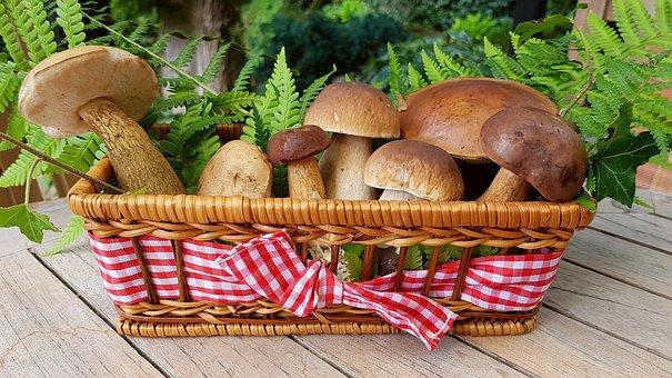 キノコ, 食品キノコ, 森の茸, バスケット, 白樺のキノコ, セップ