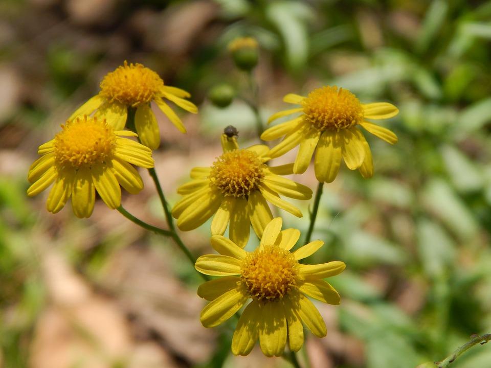Flores Amarillas Pequenas Foto Gratis En Pixabay