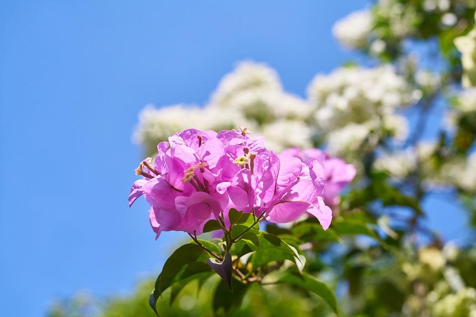 Fiore viola grappoli foto gratis su pixabay for Fiori a grappolo