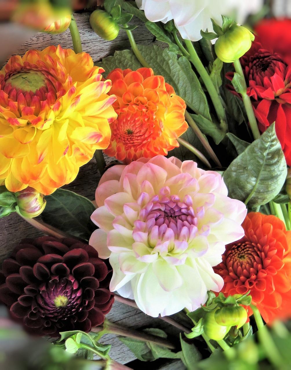 Цветы фатина, красивые букеты георгинов картинки