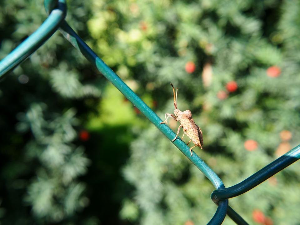 Zaun Draht Käfer · Kostenloses Foto auf Pixabay