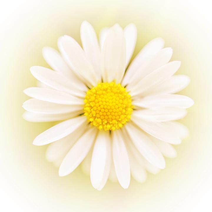 art flower free photo on pixabay