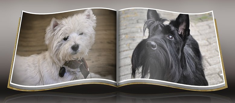 Dog, Westie, Scottish Terrier, Attention