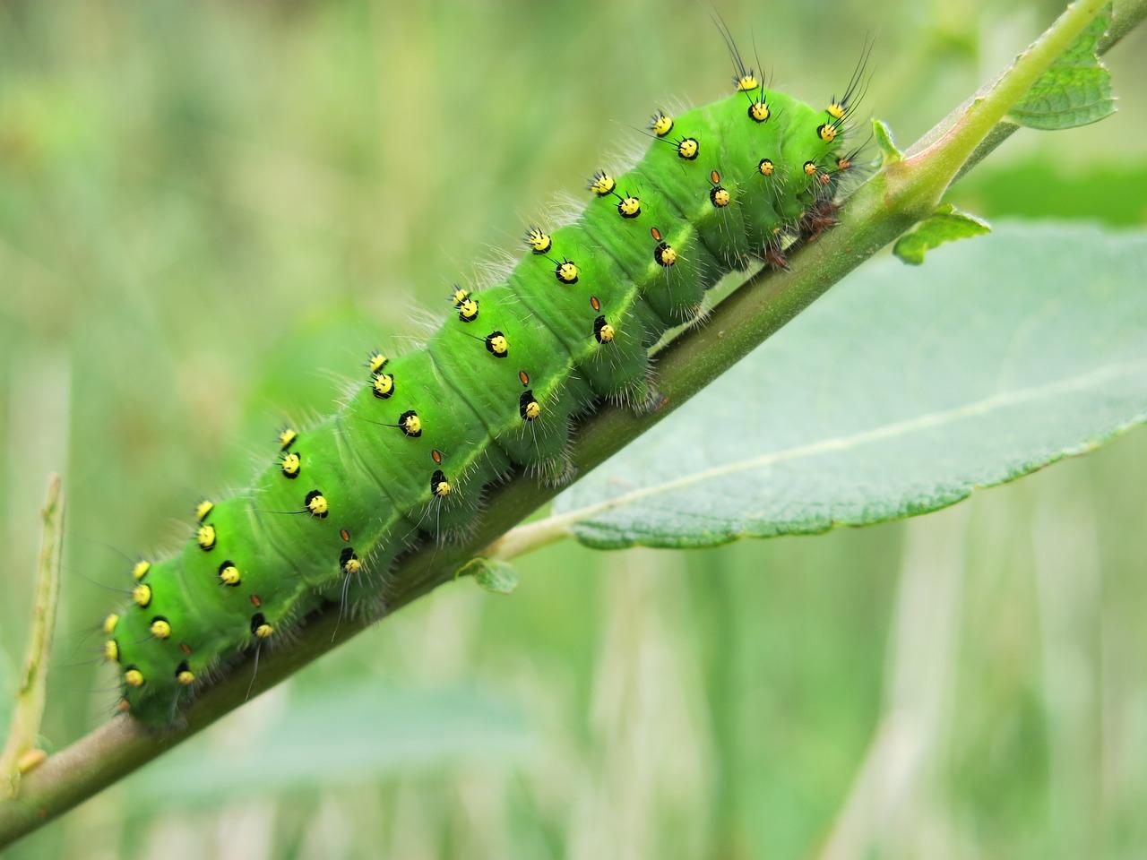 Картинки зеленых гусениц