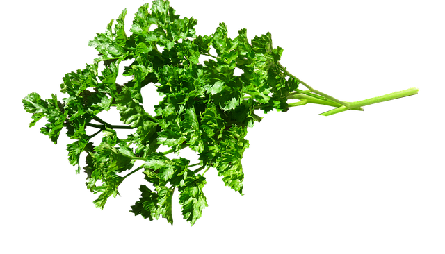 Herb Parsley 183 Free Photo On Pixabay