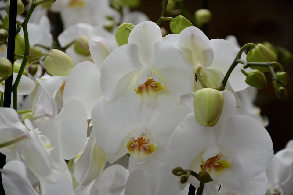fiori di orchidea