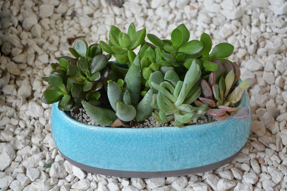 composition plante grasse cact e photo gratuite sur pixabay. Black Bedroom Furniture Sets. Home Design Ideas