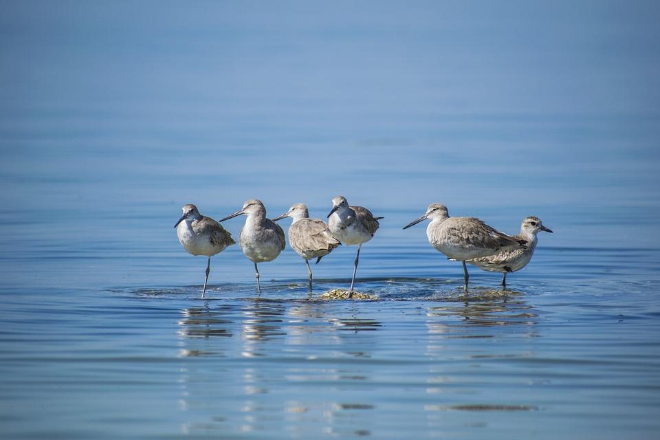 Birds Calm Water Free Photo On Pixabay
