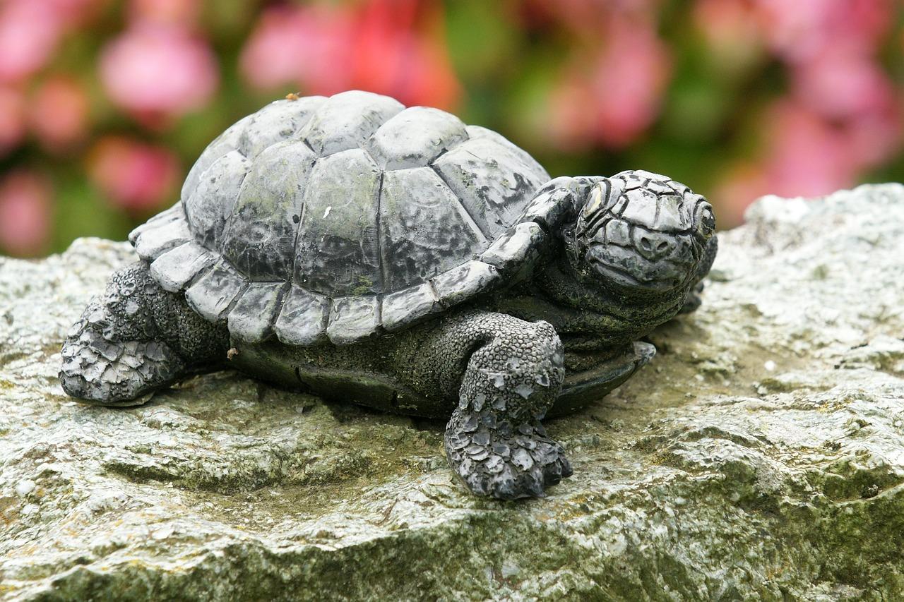 картинки черепаха из м фото актрисы