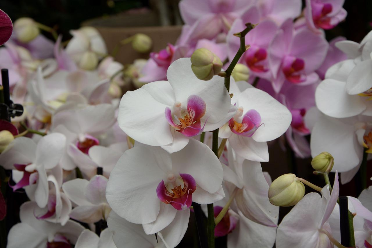 картинки орхидей на ножке против армян