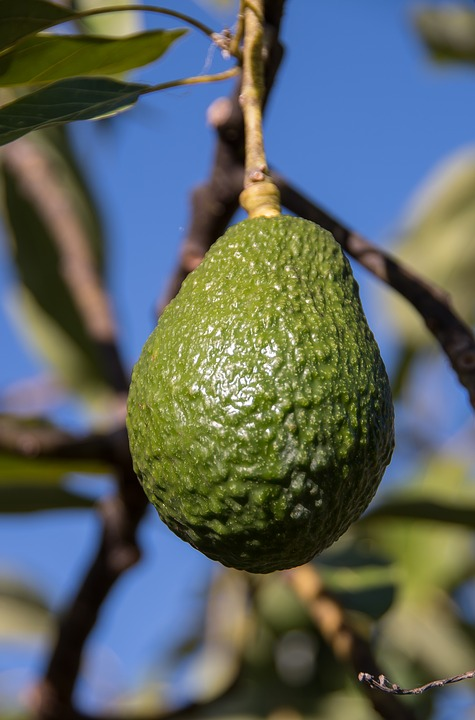 Image result for avocado and pineapple