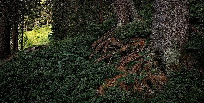 Korzenie, Las, Mrok, Przyroda, Natura