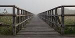 web, boardwalk, reed