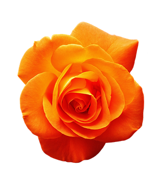 Ont Augmenté De, Orange, Fleur